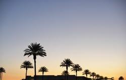 Sunsetting himmel över gömma i handflatan i Pasadena arkivbilder