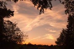 Sunsetting himmel för afton som inramas av trädfilialer royaltyfri fotografi