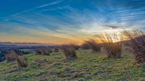 Sunsetting on the Pentland hills. Sunset in the Pentlands with tuffs of rushes, Juncus spp., in the foreground. Crisp winter afternoon in January, blue skies and royalty free stock photo