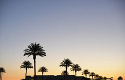 Sunsetting sky over palms in Pasadena. Sunset over palmtrees in Losangeles stock images