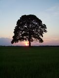 SunsetTree Stock Images