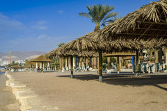 Sunshades and palm on the central beach of Eilat Royalty Free Stock Image