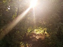 Sunshaft. In the forest Royalty Free Stock Photography