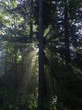 Sunshin光芒,戈尔斯基科塔尔,克罗地亚 免版税库存照片