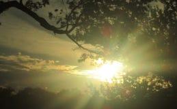 sunshine obrazy royalty free