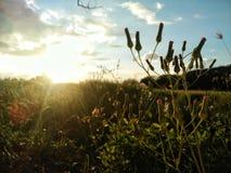 sunshine Fotos de Stock Royalty Free