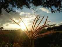 sunshine Fotos de Stock