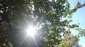 sunshine foto de stock
