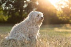 sunshine obraz stock
