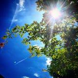 sunshine Fotografia Royalty Free