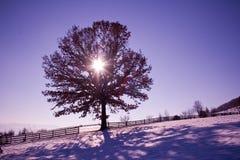 sunshine zdjęcia royalty free