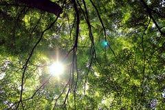 sunshine Zdjęcie Stock