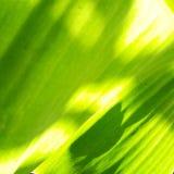 sunshine Imagens de Stock