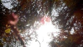 sunshine obraz royalty free