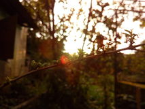 sunshine Imagem de Stock Royalty Free