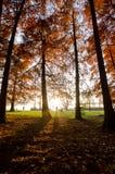 Sunshine athmosphere Stock Photo