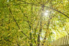 Sunshine through autumn foliage Royalty Free Stock Images