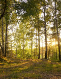 Sunshine in Autumn Forest Royalty Free Stock Photos