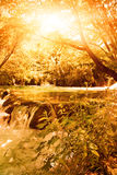 Sunshine in an autumn forest Royalty Free Stock Images