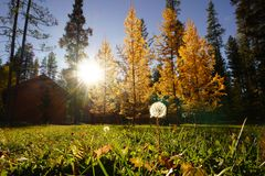 Sunshine in autumn Stock Photography