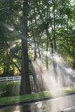 Sunshine Backlights Water From Sprinkers To Form Perfect Sunbeam Royalty Free Stock Image