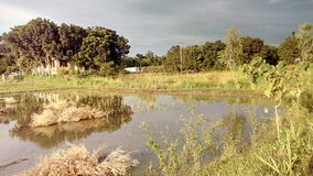 Sunshine - 05. Bangladesh manikganj beauty village nice Stock Images