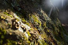 Sunshine beams over lichen and moss on a rock Stock Photos
