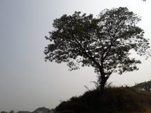 Sunshine. Beautiful place bd Stock Image