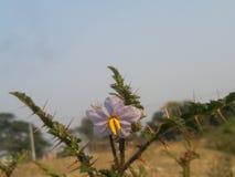 Sunshine. Beautiful view bd Stock Images