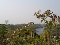 Sunshine. Beautiful view bd Stock Photos