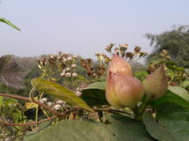 Sunshine. Beautiful village bd Stock Photos