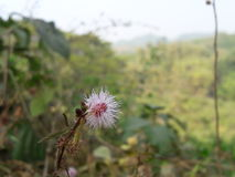 Sunshine. Beautiful village bd Royalty Free Stock Images
