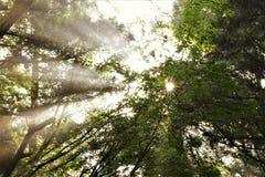 Sunshine. A beautiful sunshine in Yakushima island, Japan Stock Photos