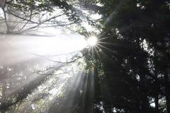 Sunshine. A beautiful sunshine in Yakushima island, Japan Stock Image