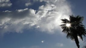 Sunshine behind a palm tree. Blue sky stock video