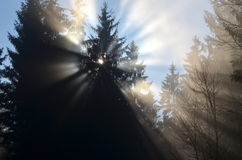 Sunshine behind the tree appears as an angel Royalty Free Stock Photo