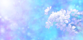 Sunshine bokeh blossom banner. Bright blue bokeh background with blossom and sunlight Royalty Free Stock Images