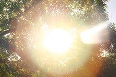 sunshine céu Sol brilhante no céu Círculos da luz solar fotografia de stock