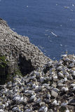 Sunshine at Cape St. Mary`s Ecological Reserve royalty free stock image
