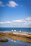 Sunshine Coast Queensland coastline Royalty Free Stock Photos