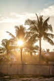 The sunshine through the coconut Royalty Free Stock Images