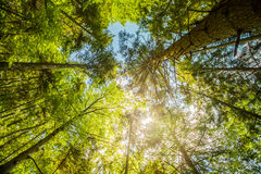 Sunshine in the colorful forest with blue sky and great weather. At summer Stock Photo