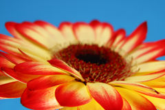 Sunshine daydream. Flowers, Nature's beauty, Daisy close up royalty free stock images