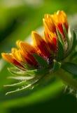 sunshine dobieraniu kwiat Zdjęcie Royalty Free