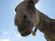 Sunshine Donkey royalty free stock photo