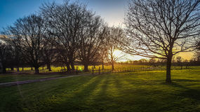 Sunshine in the evening at Felbrigg, Norfolk stock image