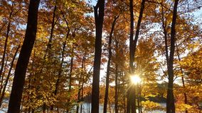 Sunshine through fall colors. Sunshine through the fall colors in northern Wisconsin stock image