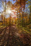 Sunshine in fall forest Royalty Free Stock Images