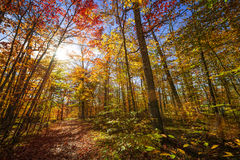 Sunshine in fall forest Stock Image