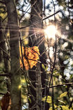 Sunshine on an fall leaf Royalty Free Stock Photo
